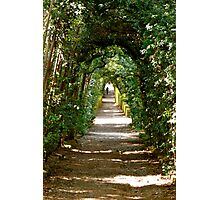Boboli: archway of trees Photographic Print