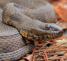Water Snake by William C. Gladish