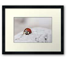 Ladybug with Two Faces Framed Print