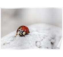 Ladybug with Two Faces Poster