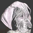 Dog Drawing by Dena Kotka-Holtz