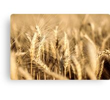 Ripe Wheat Canvas Print
