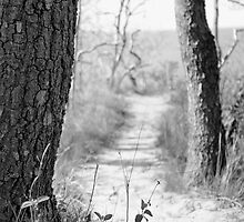 Path to the Shore (Black and White) by RogerEchauri