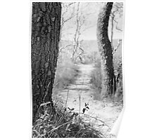 Path to the Shore (Black and White) Poster