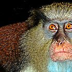 Mona Monkey by globeboater