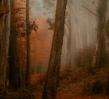 Bushland Solitude  - Mount Wilson - NSW  - The HDR Experience by Philip Johnson
