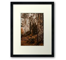 Bush Guardians  - Mount Wilson - NSW  - The HDR Experience Framed Print