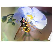 Hoverfly on Wild Blue Flax Poster