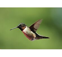 Ruby throated Hummingbird. Photographic Print