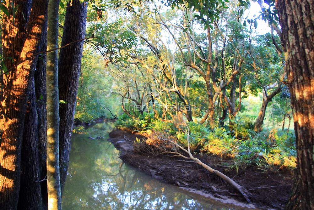 uralba creek by Trish Threlfall
