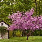 American Red Bud Tree by Penny Rinker
