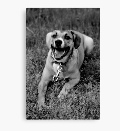 Molly In The Grass I Canvas Print