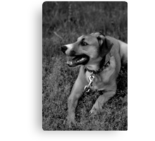 Molly In The Grass III Canvas Print
