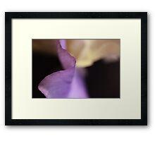Lavender Ribbon Framed Print