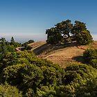 A View from Mount Tamalpais by Richard Thelen
