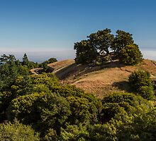 A View from Mount Tamalpais by Richard Thelen