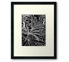 The Light Catchers Framed Print