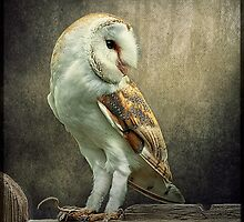 Barn Owl and Mouse by Tarrby