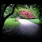 Bench at Stourhead by Sally Barnett