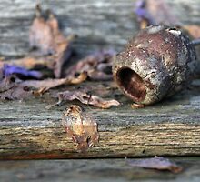 Seedpod crevices by Jack Doherty