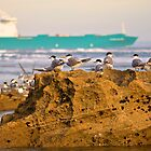 Port Phillip Terns by D-GaP