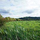 Somerset Levels by Sally Barnett