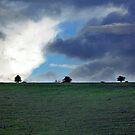 Landscape by Sally Barnett