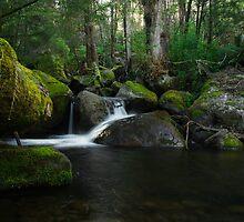 Moss covered landscape by Simon Penrose