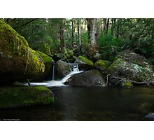 Moss covered landscape Photographic Print