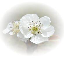 Pear Blossom by designingjudy
