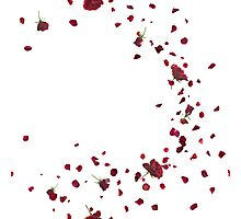 Passionate Red Roses Breeze Photographic Print