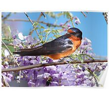 The Barn Swallow Poster