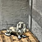 Dog In Corner by SuddenJim