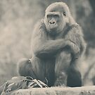 Looking So Sad by Laurie Search