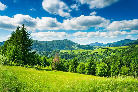 meadow in mountains by pellinni