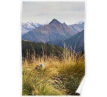 Alpine Grass Poster