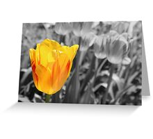 Tulip in Living Color Greeting Card