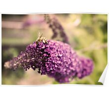 The Bee and the Butterfly Bush Poster