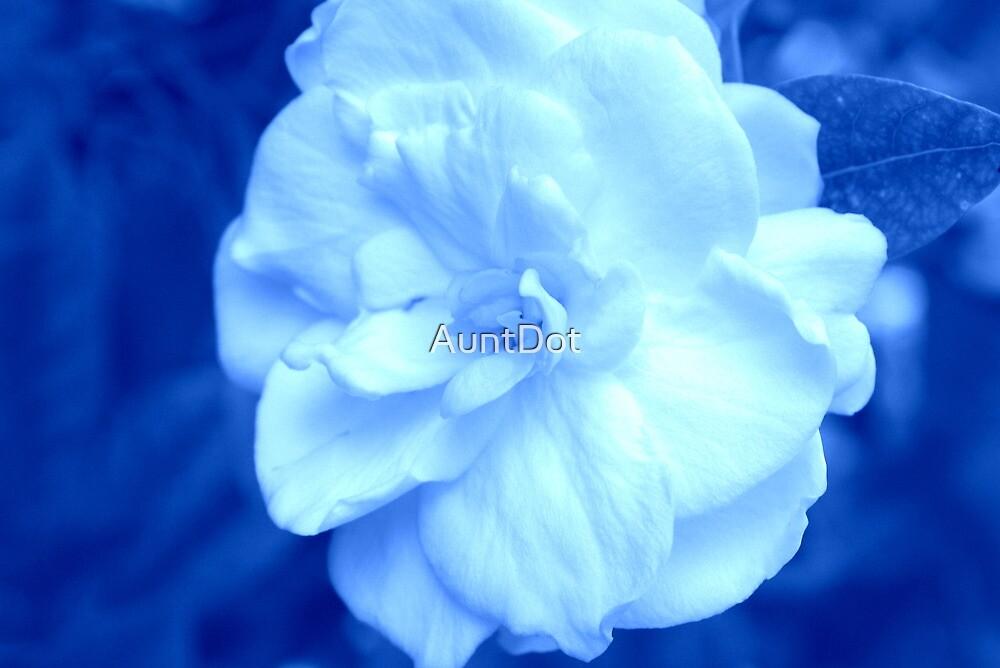 Gardenia on Blue by AuntDot