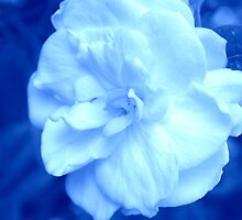 Gardenia on Blue by AuntDot
