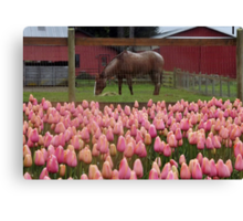 Just Another Day in Our Backyard - #1 of Series Canvas Print