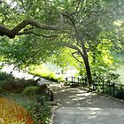 Central Park In New York by Nancy Badillo