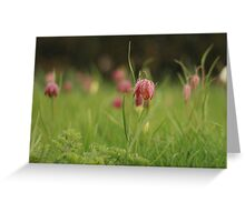 Waving Snake's head fritillaries at Downton Abbey Greeting Card
