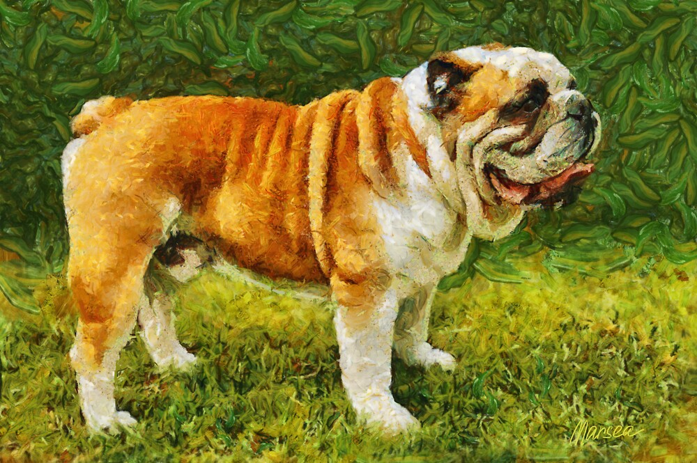 Winston by Marsea