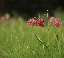 Wild flower meadow at Downton Abbey by miradorpictures