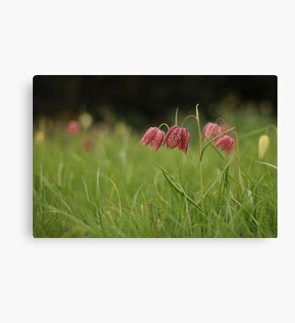 Wild flower meadow at Downton Abbey Canvas Print