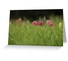 Wild flower meadow at Downton Abbey Greeting Card