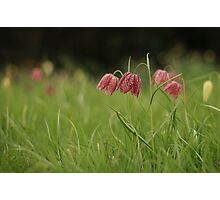 Wild flower meadow at Downton Abbey Photographic Print