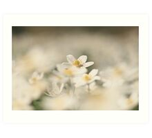 A sea of white, a wood anemone at Downton Abbey Art Print