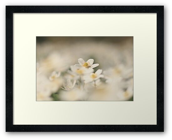 A sea of white, a wood anemone at Downton Abbey by miradorpictures